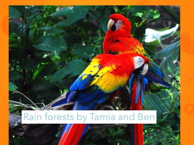 Rainforest by Jane Miller _ Staff - FuquayVarinaE