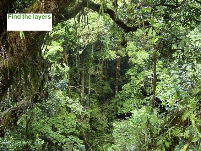 Rainforests Quiz by Y6F Y6F