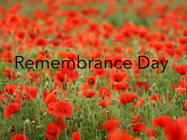 Remembrance Day by Amelia Hussain