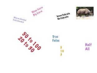 Rhinoceros  by Tracy Bye
