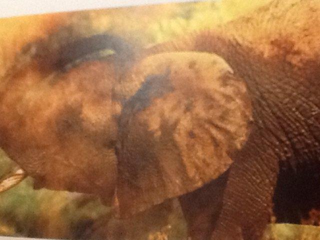 Richard Elephants by Keegan scelia
