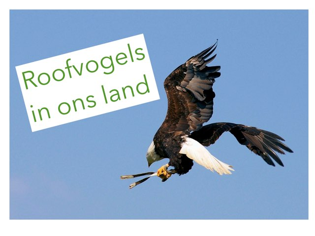 Roofvogels In Ons Land by Gino Vanherweghe
