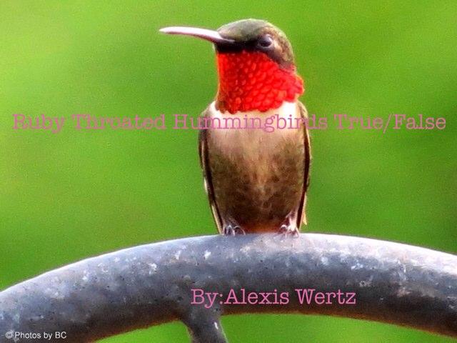 Ruby Throated Hummingbird Alexis Wertz by Alexis Wertz