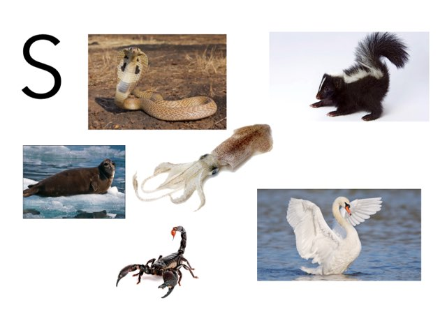 S A Animals by Beaufort school