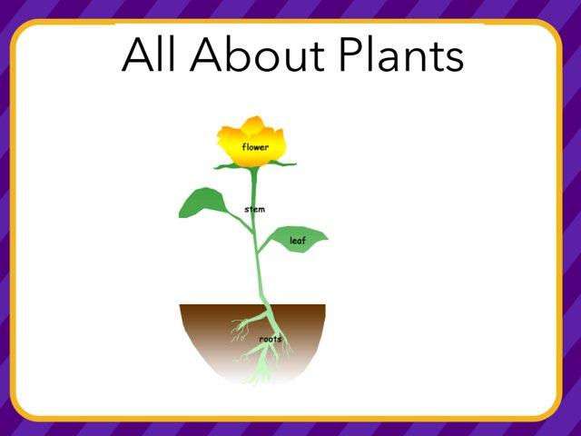 Sam Plants by Hulstrom 1st Grade