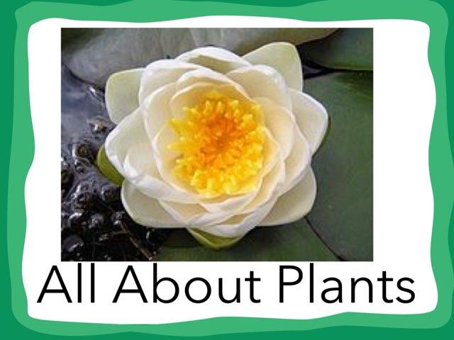 Samantha Plants by Hulstrom 1st Grade