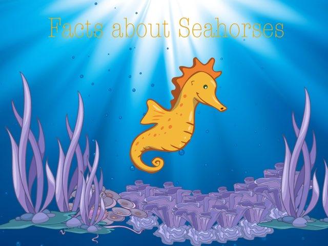 Seahorses  by Mica Ela