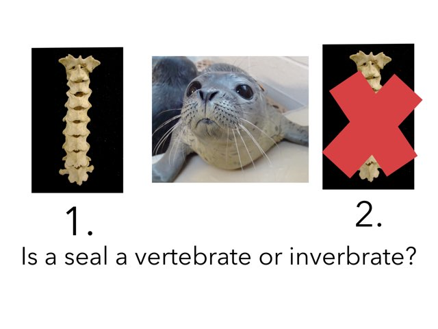 Seals by Linda Lonergan
