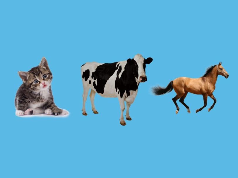 Select Correct Animal given Sound by Ryan Detloff