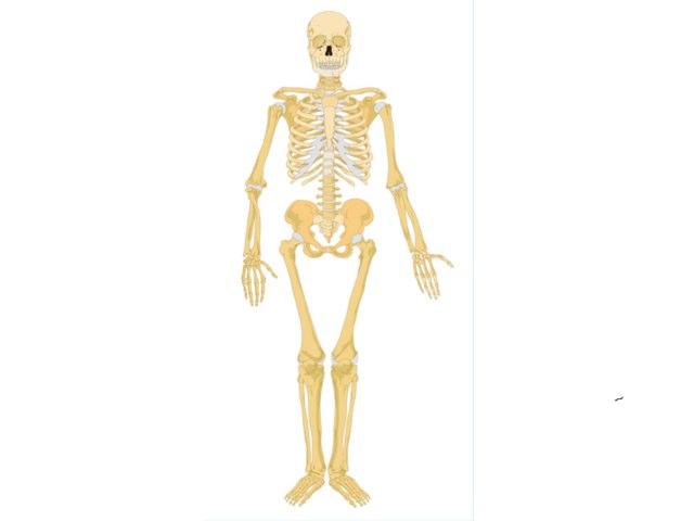 Selina skeleton by Mr Parkinson