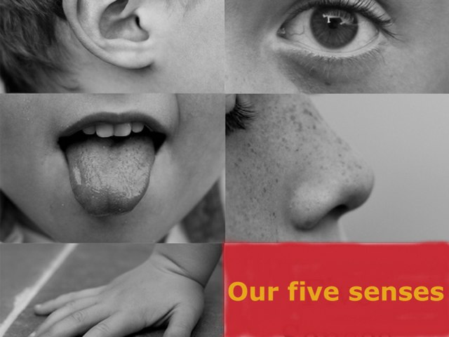 Senses by Sparkly Miller