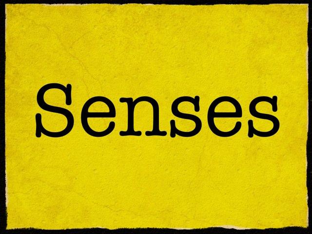 Senses by Mica Ela