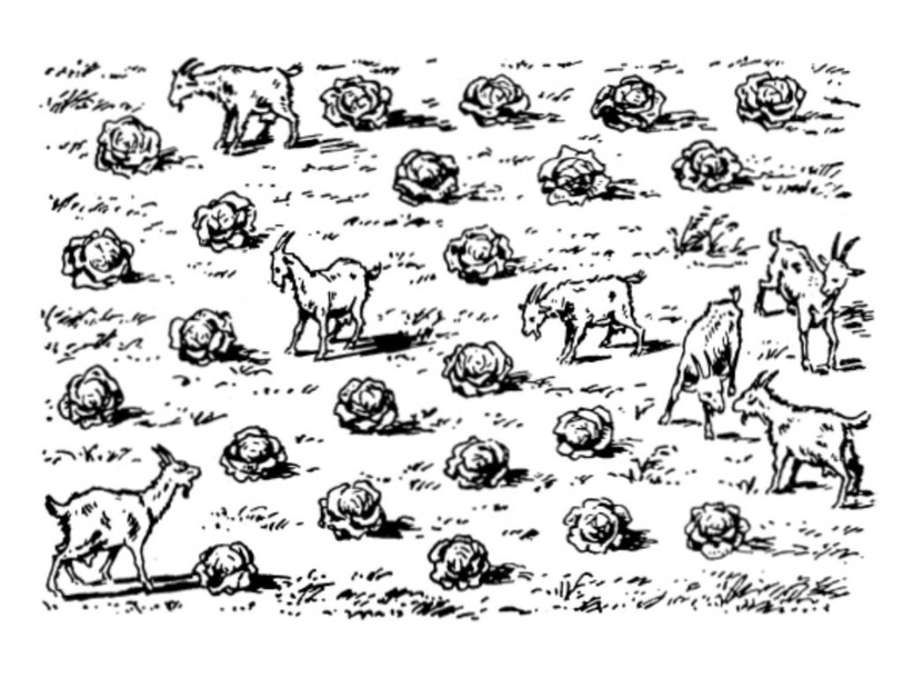 Separate the Goats from the Cabbage with only 3 line segments. by Mira Kreovic
