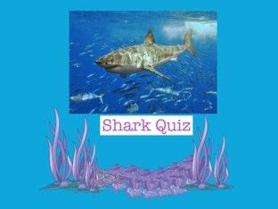 Shark Trivia Copy  by Linda Lonergan