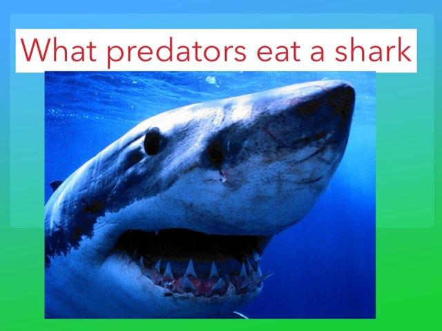 Shark by Jane Miller _ Staff - FuquayVarinaE