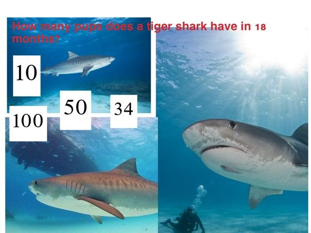 Sharks by Krystal Wiggins