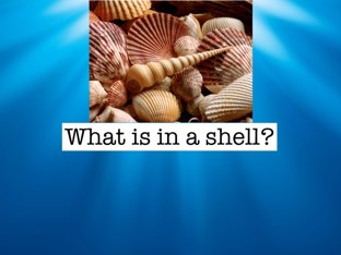 Shell Knowledge by Linda Lonergan