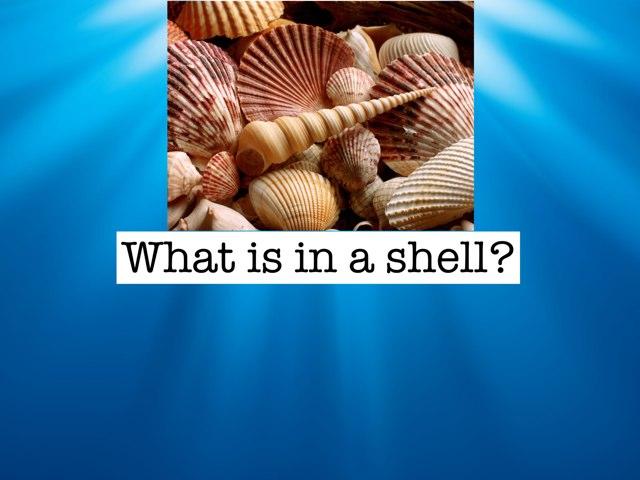 Shell Knowledge by Linda Lonergan