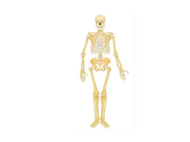 Skeleton AkanshA by Mr Parkinson
