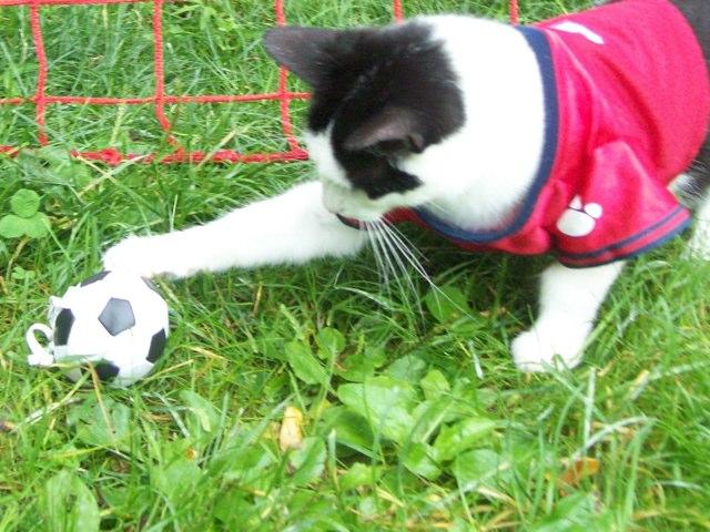 Soccer Cat by Slam Fm
