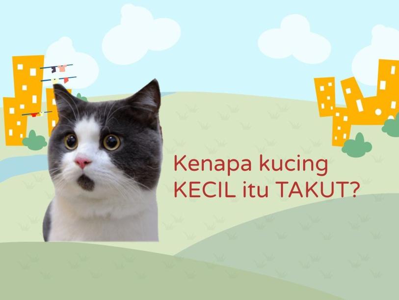 Social Thinking: Kenapa Kucing Kecil itu Takut? by SLP NURAFINIHAMZAH