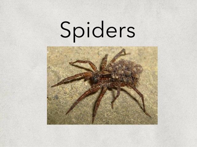 Spiders  by Amanda Kae