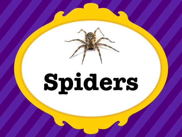 Spiders by Corinne Burke