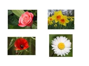 Spring Vocab  by Esme Sifuentes