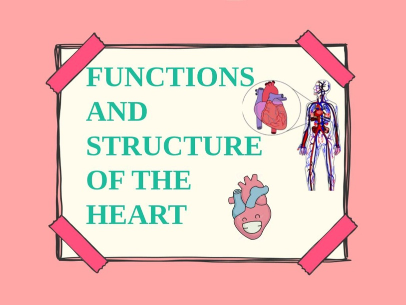 Structure and Function of the Heart by Lalala Blah