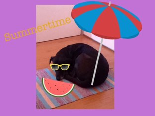 Summertime Doggy by Year One