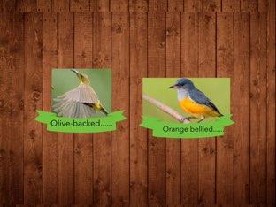 Sunbirds by Nat fisch