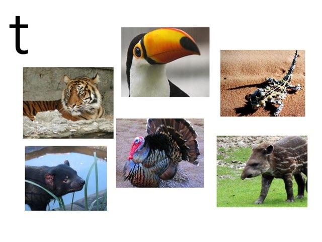 T Animals by Beaufort school