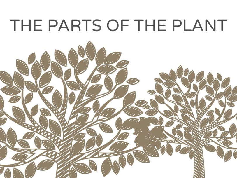 THE PARTS OF THE PLANT by Primaria Interattiva