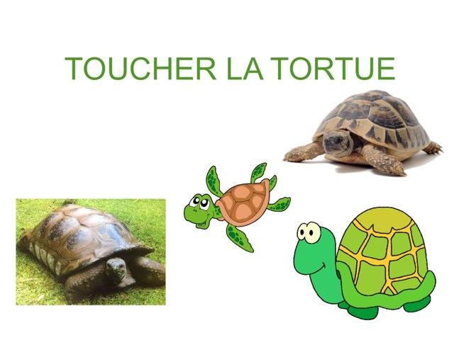 TOUCHER LA TORTUE by Valerie Escalpade