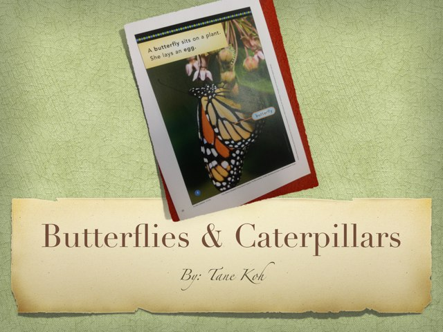 Tane Butterflies And Caterpillars by P302 SAS