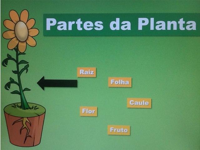 Tania A. - Partes Da Planta by Tania Airoldi