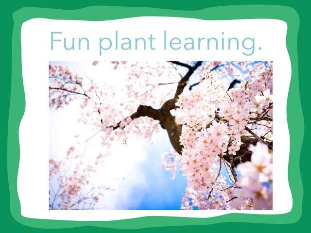 Taylor Plants by Hulstrom 1st Grade
