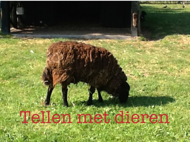 Tellen Met Dieren by Nynke vries
