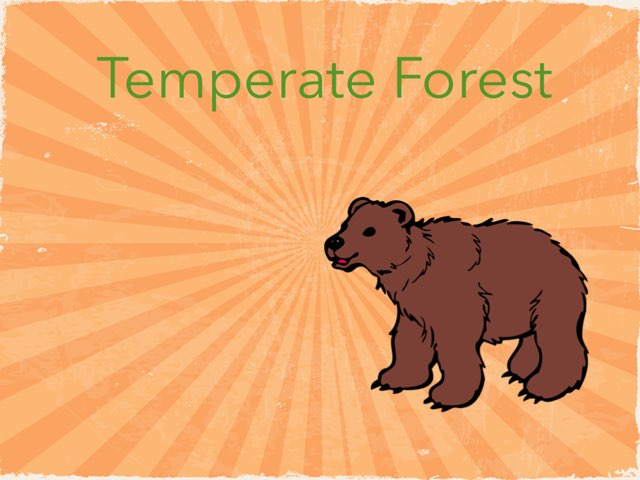 Temperate Forest by Edgemere Elementary