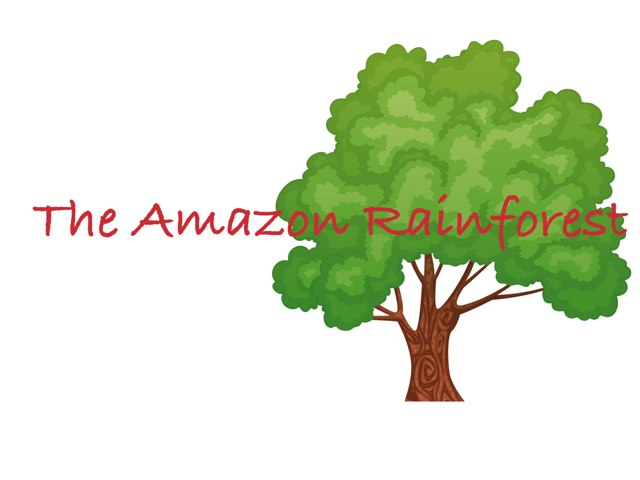The Amazon Rainforest by Angel Chitre