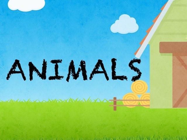 The Animals Quiz by Rafa Landete