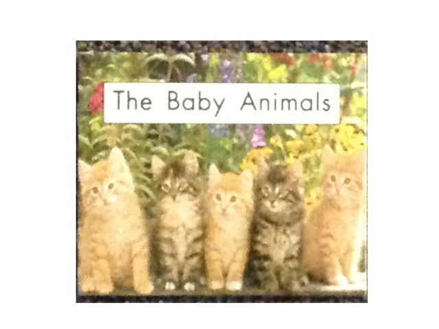 The Baby Animals by Chrissy Waned
