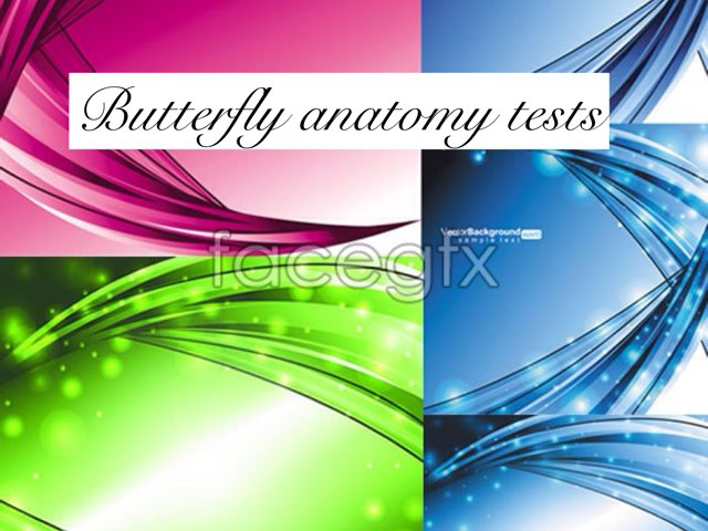 The Butterfly Anatomy Test by Coach Nikic