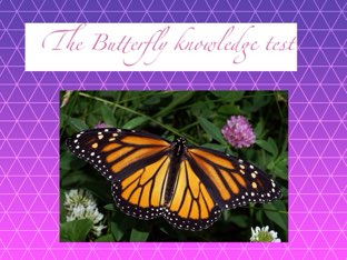 The Butterfly Knowledge Test! by Coach Nikic