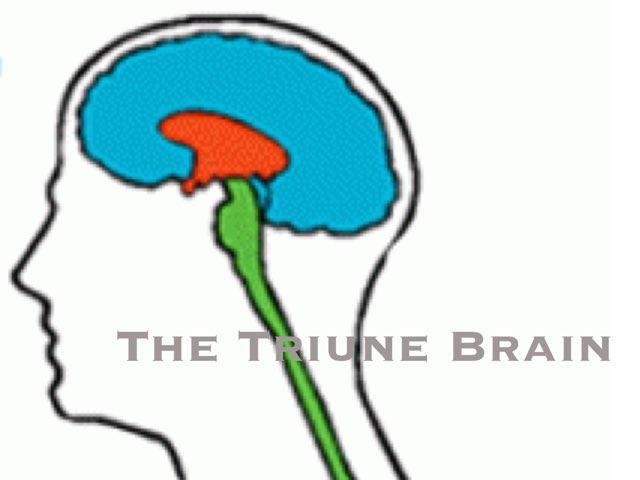The Human Brain by Diana Vornicu-Eger