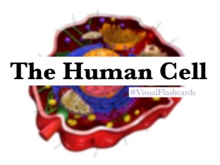The Human Cell by Yogev Shelly