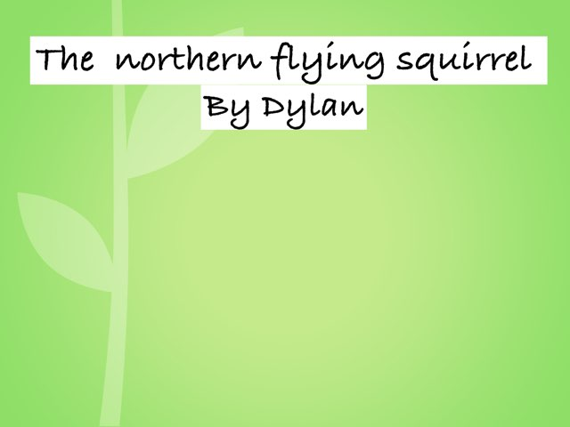 The Northern Flying Squirrel  by Amy Clay