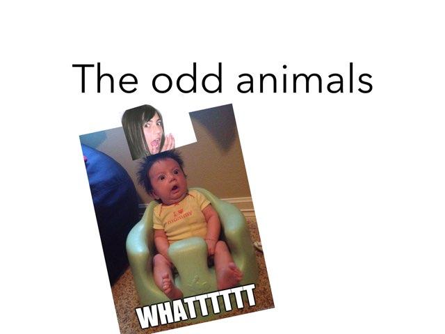 The Odd Animals by Xavia smith