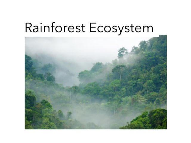 The Rainforests Ecosystem  by Sarah Bosch