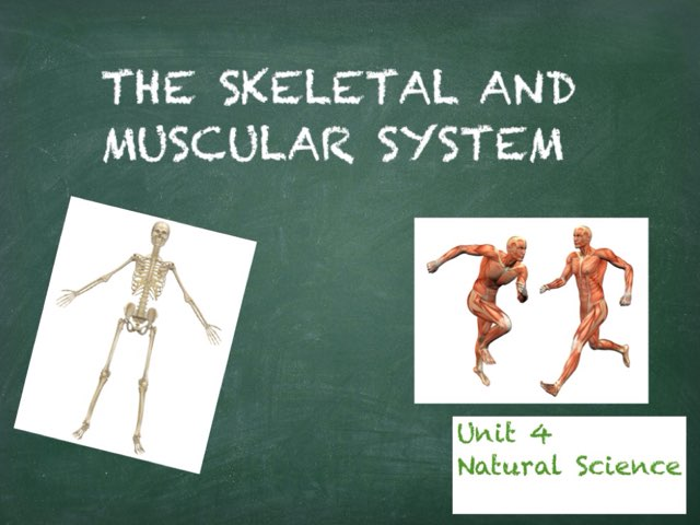 The Skeletal And Muscular System by Irene Arroyo